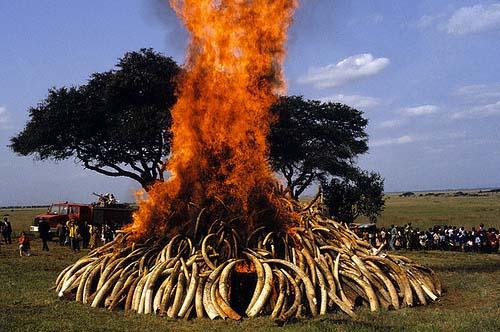 Ivory burn in Nairobi Kenya 1989
