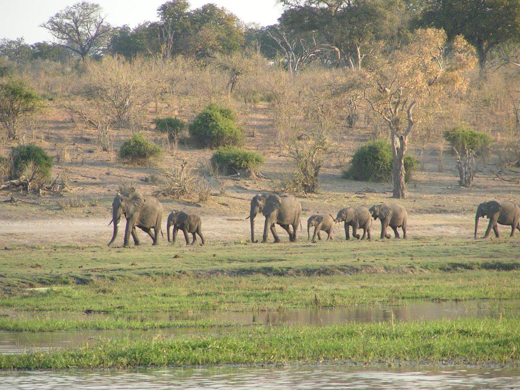 Herd of African Elephants (USGOV-PD)