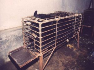 A bile bear kept in captivity so that her bile can be extracted. Photo by Asian Animal Protection Network in Huizhou Farm, Vietnam. (CCA3.0)