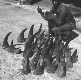 Black rhino horns being sold in Zambia. Photo by Peter Jackson.