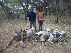 Giraffe poachers arrested by Big Life Rangers in Rombo, Kenya. May 2011. Photo by Big Life.
