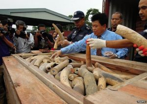 Officials examine a seized shipment of ivory disguised as lumber. Source: TRAFFIC.