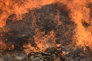 Pangolin scale burn in Cameroon 1 - Kenneth-Cameron - USFWS