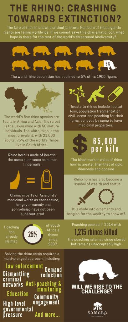 Rhino Infographic by Samara PGR