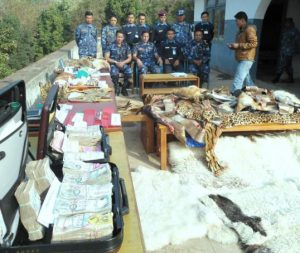 Tiger and leopard skin bust in Nepal during Operation Prey (Credit: Interpol)