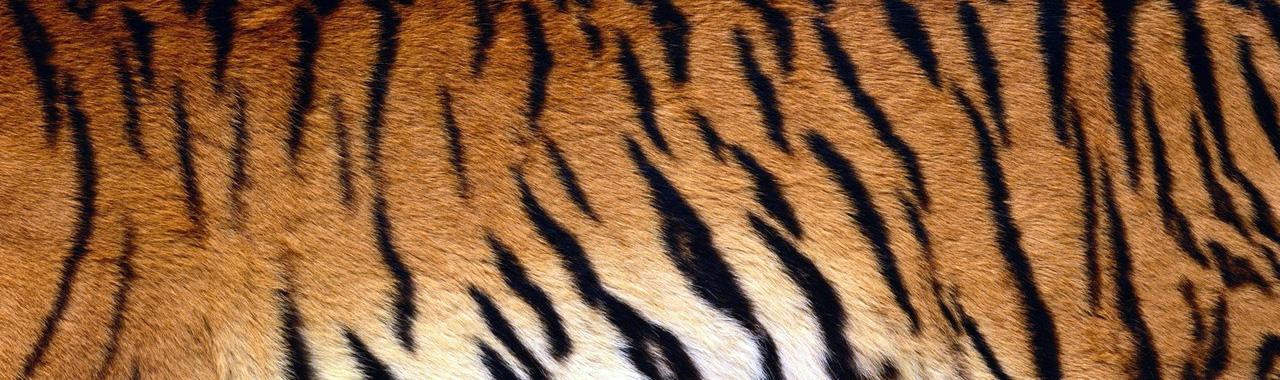 Tiger Stripes (PD)