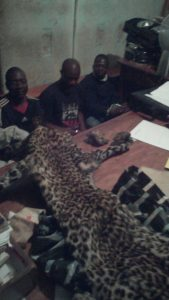Zambian Traffickers with wildlife trophies.